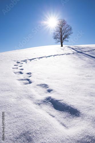 Zdjęcie XXL prosta zima