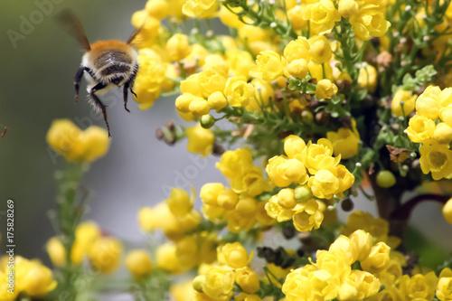 фотография Insecte volant au jardin