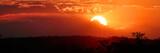 Fototapeta Sawanna - Sonnenuntergang im Tarangiri Nationalpark, Tansania, Ostafrika, Panoramaaufnahme
