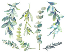 Watercolor Winter Plants Set. Hand Drawn Botanical Elements Isolated On White Background. Branches With Berries, Eucalyptus, Mistletoe For Modern Natural Design
