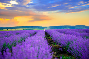 Fototapetalittle girl running around and playing in lavender field at sunset