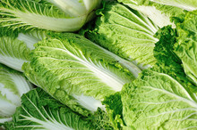 Fresh Chinese Cabbage Selling ...