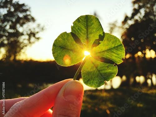 mano quadrifoglio fortuna natura