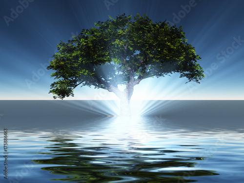 Plakat Zielone drzewo