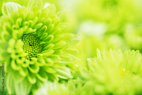 Soft fresh green flower for love romantic dreamy background , fresh and relax concept