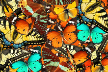 Colorful Butterflies Background. Nature And Wildlife. Insects Collection Abstract