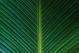 Close up vertical green leaves pattern texture background. Natural photography