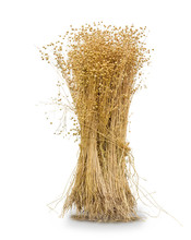 Sheaf Of The Harvested Flax On A White Background