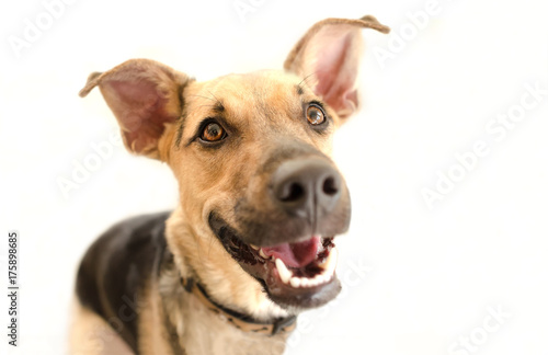 Happy Dog Isolated Wallpaper Mural