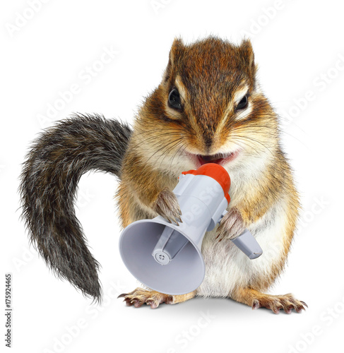 Funny animal chipmunk shouting into megaphone