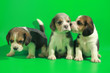 Leinwanddruck Bild - 