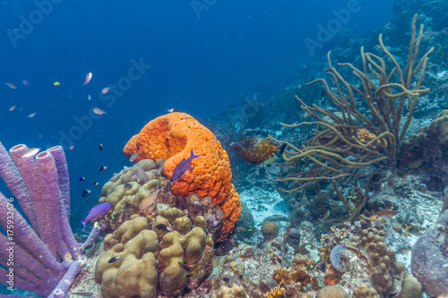 Plakat Karaibska rafa koralowa