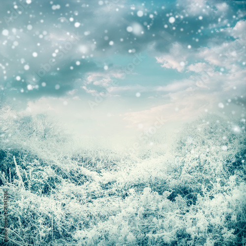 Poster Donkergrijs Amazing winter landscape with frozen trees and plants at beautiful sky background with snow