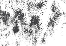 Fir Branches Texture. Christmas Overlay. Nature Illustration.Black And White Vector Background For Retro Design.