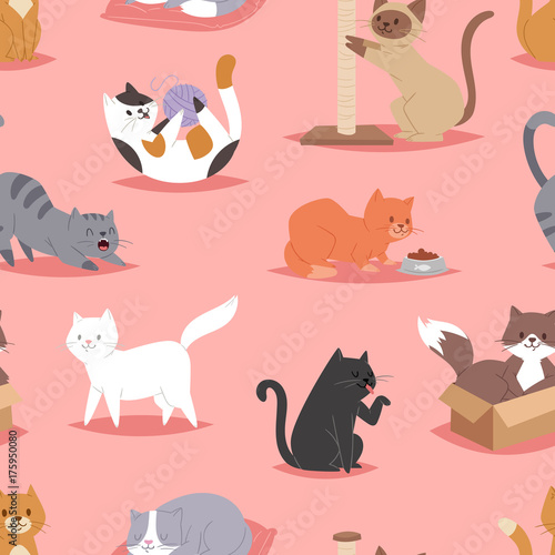 obraz PCV Different cats kitty play defferent pose character illustration vector seamless pattern background