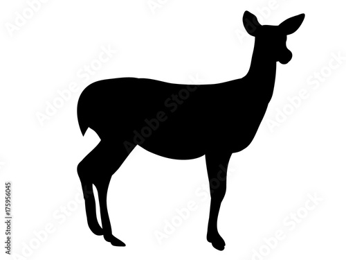 Foto isolated silhouette of a deer