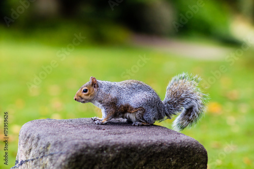 In de dag Zwavel geel A squirrel stood on a rock