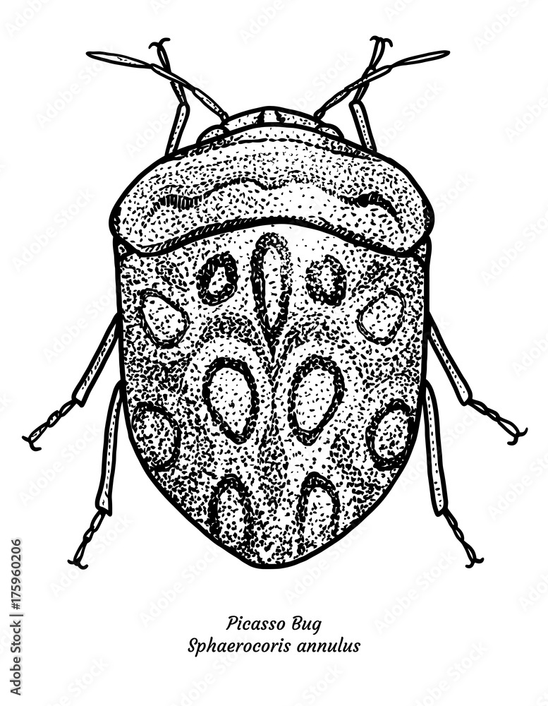 Picasso bug illustration, drawing, engraving, ink, line art, vector