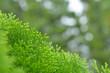 緑の葉 木漏れ日