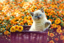 Cute Little Kitten In Orange D...