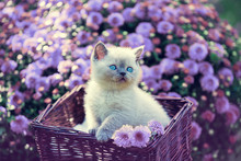 Cute Little Kitten In A Basket...