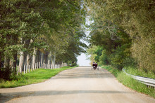 A Mennnonite Wagon In The Distance Driving Down A Long Country Road With Trees On Either Side