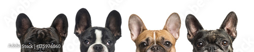 Close-up of upper heads of dogs, isolated on white