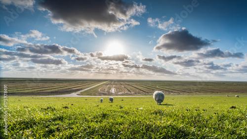Fotografia, Obraz  Schaf im Sonnenlicht
