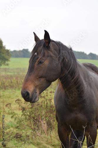 Dark horse animal portrait Poster