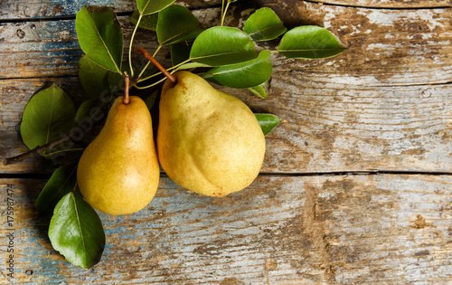 pears on rustic wooden background. autumn harvest with copy space