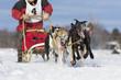 Dog sledding race in Quebec, Canada