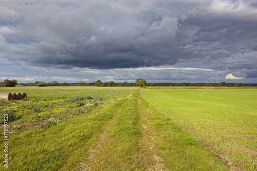 Foto op Canvas Pistache autumn woodland and farm track
