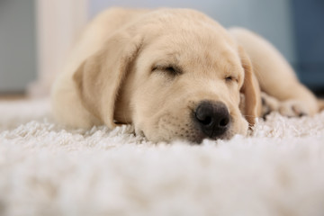 Cute puppy sleeping on floor at home