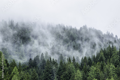 Garden Poster Forest Forest in mist, low clouds in conifers, Austrian alps