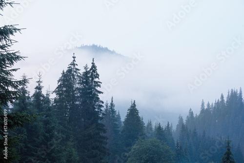 mglisty-krajobraz-z-gorami-i-jodlowego-lasu-w-hipster