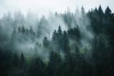 Mglisty krajobraz z jodły lasu w stylu retro vintage hipster - 176015643
