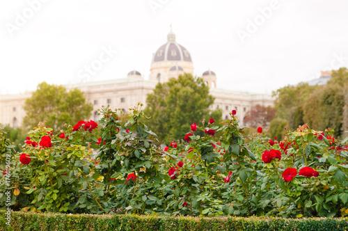 Obraz na dibondzie (fotoboard) Róże w Volksgarten w Wiedniu