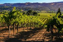 Rolling Hills Of California Vi...