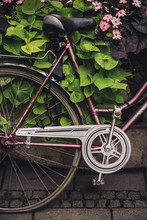 Vintage Bike Parked In Flowers