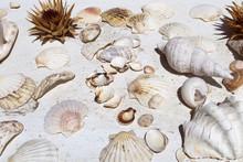 Various Seashells On White Background
