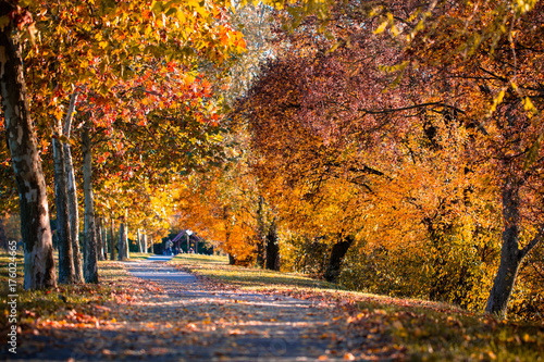 Foto op Canvas Herfst Alley of a beautiful autumn trees in a park