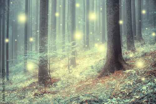 Foto auf Gartenposter Grau Lovely magic colored blurred foggy forest trees with illustrated abstract bokeh light.
