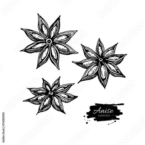 Photo Anise Star Vector drawing. Hand drawn sketch. Seasonal food illu