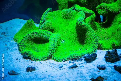 Poster Sous-marin Beautiful live corals on the seabed. Excellent background of the underwater world