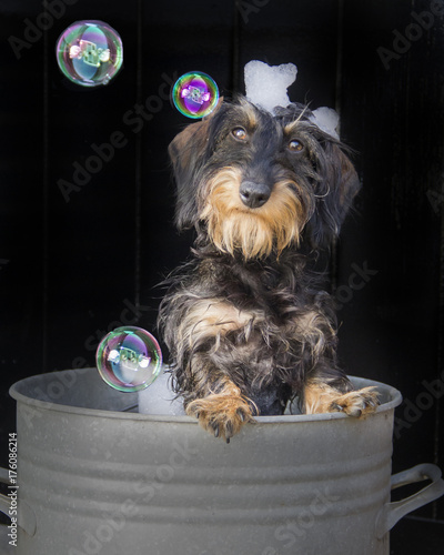 Montage in der Fensternische Hund puppy bubble bad