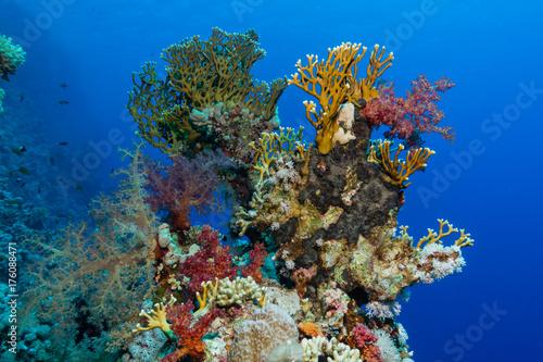 Spoed Foto op Canvas Onder water Buntes Korallenriff