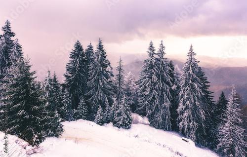 zimowy-las-i-rozowe-niebo
