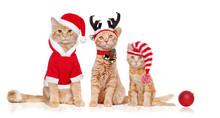 Three Red Kittens Wearing Chri...