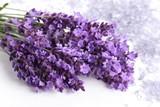 Fototapeta Lavender - Lavender.