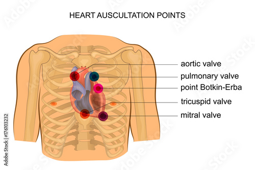 Photo heart auscultation points